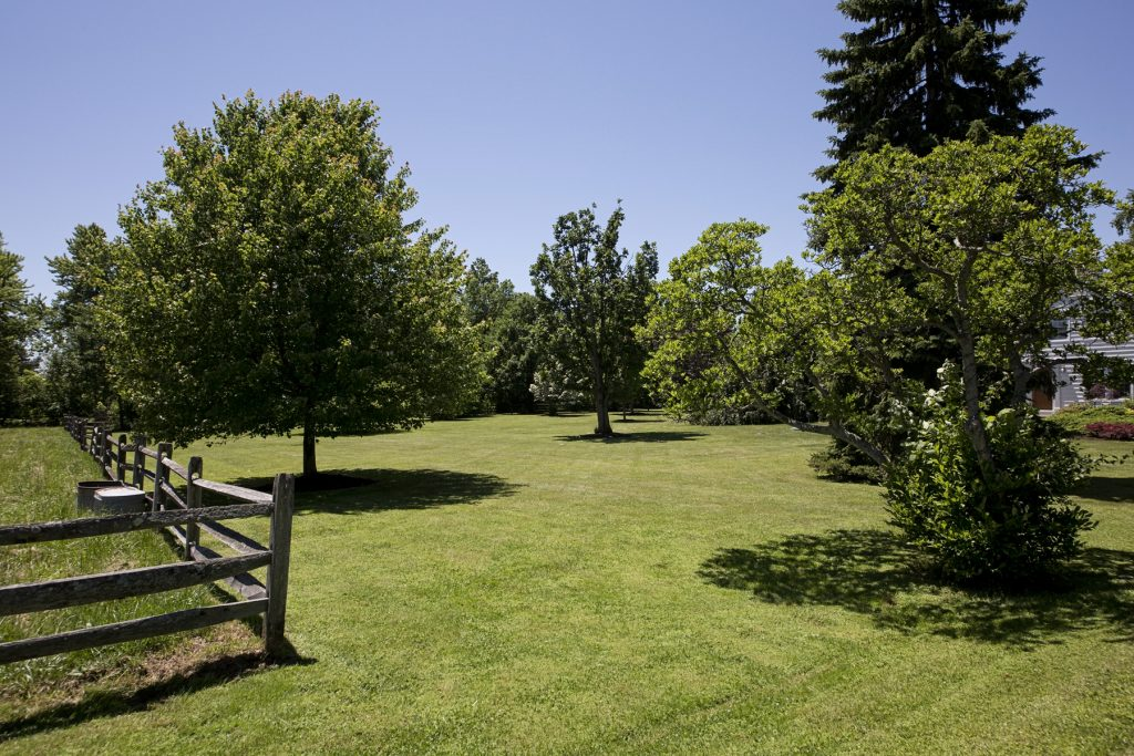 Green pastures with trees