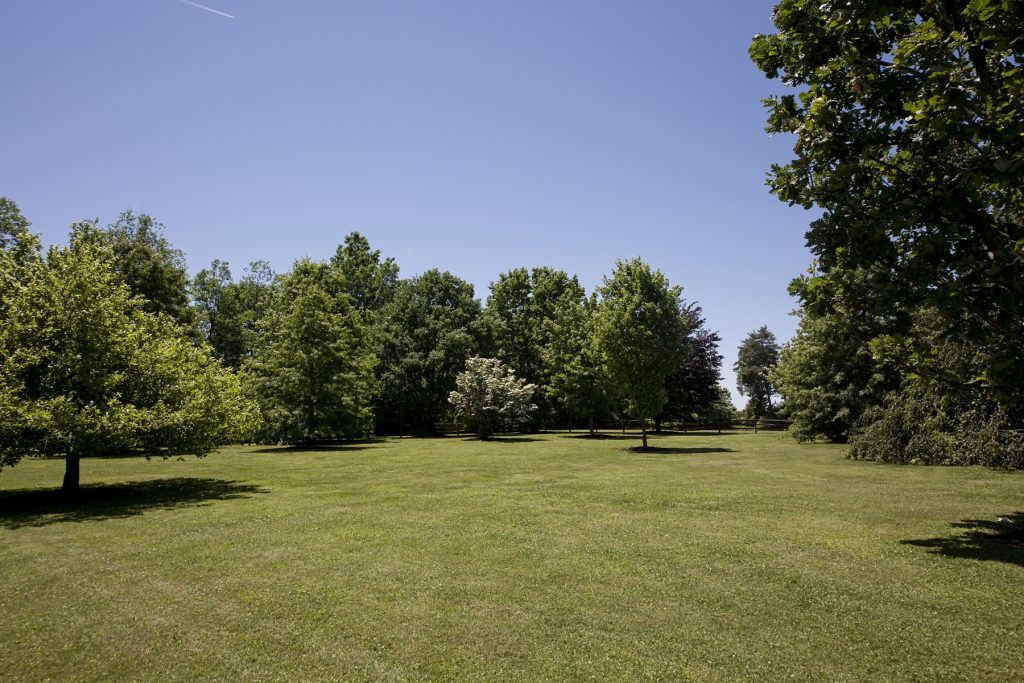 Lawn with trees