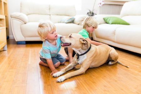 Make Your Home Safe for Pets