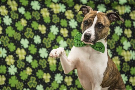 Dog with green bow tie
